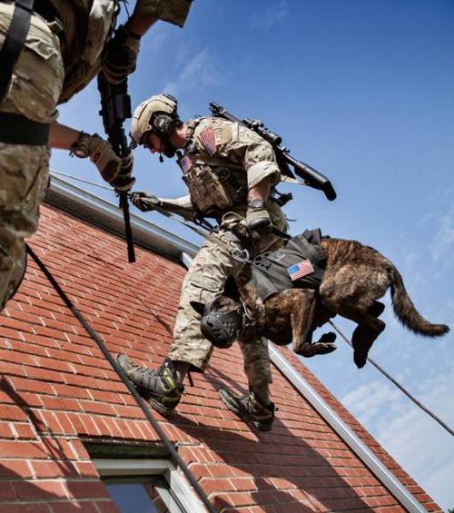 戦地での軍用犬の日常がわかるちょっと癒される画像の数々!!の画像(43枚目)