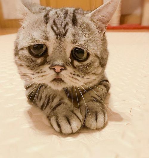 悲しくなってしまう猫の画像(7枚目)