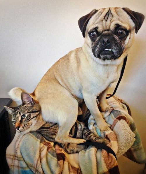 犬は可愛いけど、かなりジャマな感じの犬の画像の数々!!の画像(22枚目)