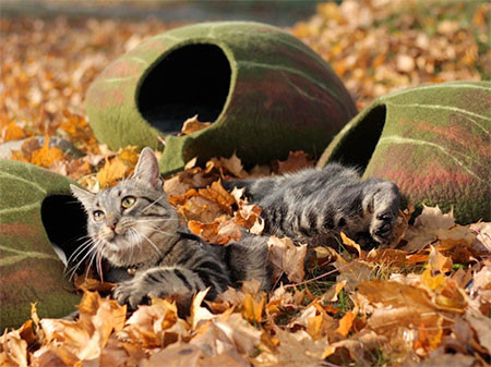 葉っぱのような猫の家の画像(2枚目)