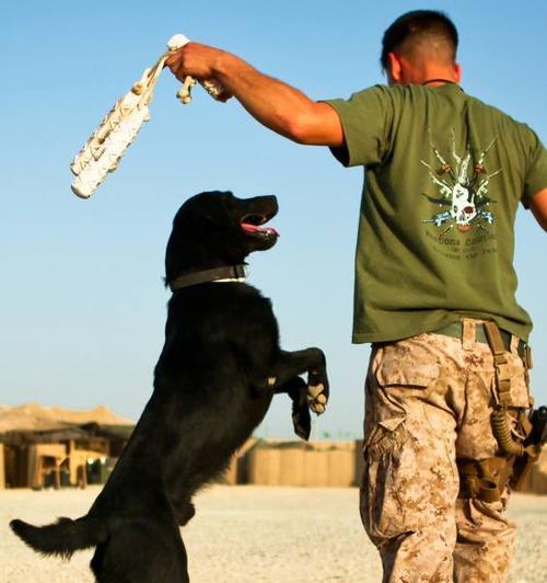 戦地での軍用犬の日常がわかるちょっと癒される画像の数々!!の画像(25枚目)
