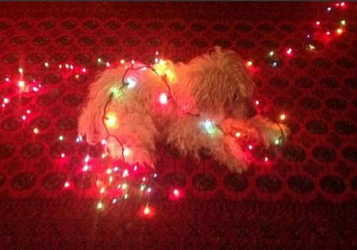 犬とクリスマスの画像(19枚目)