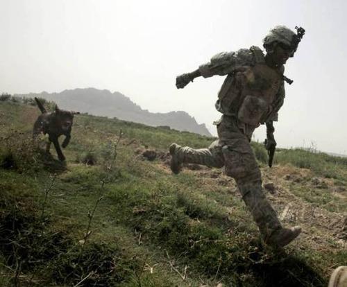 戦地での軍用犬の日常がわかるちょっと癒される画像の数々!!の画像(48枚目)