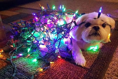 犬とクリスマスの画像(1枚目)