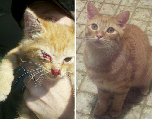 【画像】子汚い野良猫を拾って育てたら、こんなに可愛いニャンコになりましたよ!の画像(27枚目)