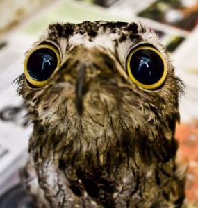 動物達が驚いている瞬間の表情をとらえた写真が凄い!の画像(19枚目)