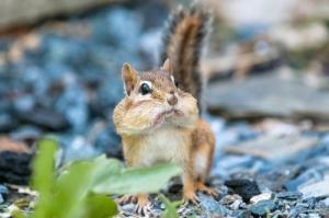 動物達が驚いている瞬間の表情をとらえた写真が凄い!の画像(10枚目)