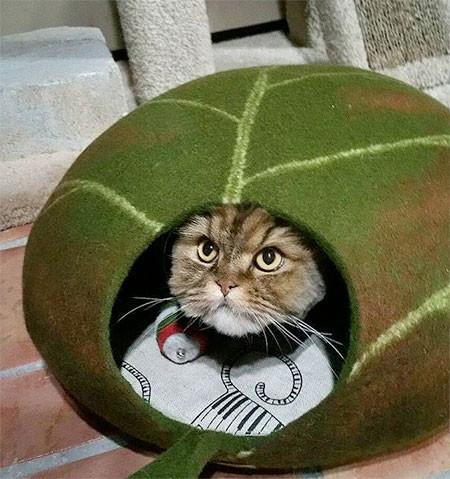 葉っぱのような猫の家の画像(6枚目)