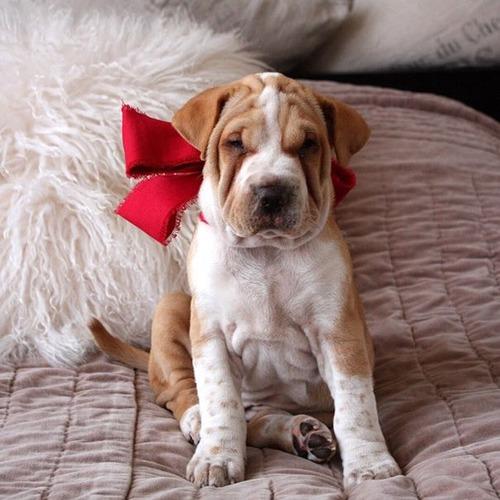 可愛い?可愛くない?ちょっと特徴的な雑種の犬の画像の数々!!の画像(36枚目)