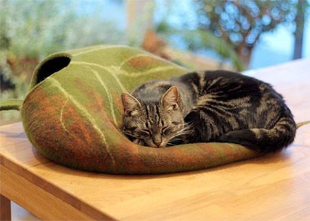 葉っぱのような猫の家の画像(5枚目)