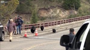 子連れのクマが観光客を追いかける怖すぎる動画…_000053029