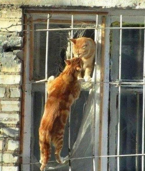 動物たちの驚きの瞬間の画像(16枚目)