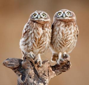 動物達が驚いている瞬間の表情をとらえた写真が凄い!の画像(24枚目)