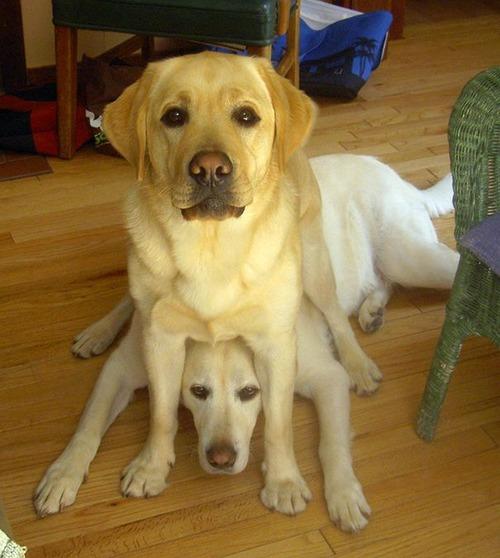 犬は可愛いけど、かなりジャマな感じの犬の画像の数々!!の画像(15枚目)