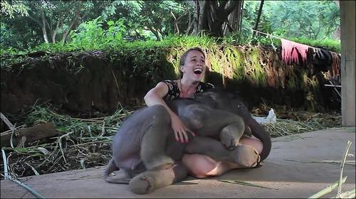【動画】子供のゾウに懐かれると嬉しい_000008574