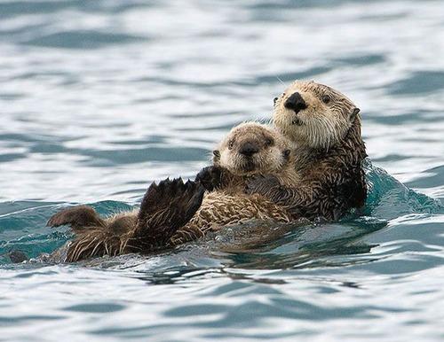 色々な動物の親子の癒される画像の数々!!の画像(9枚目)