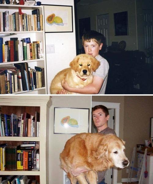 犬の成長の画像(24枚目)