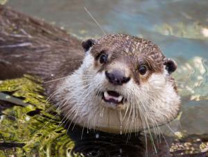 動物達が驚いている瞬間の表情をとらえた写真が凄い!の画像(16枚目)
