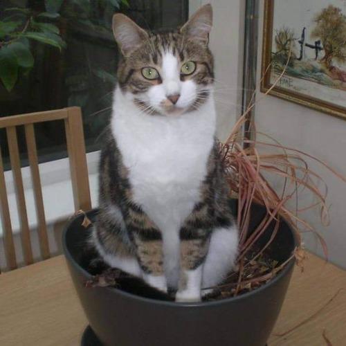 にゃんとも言えない、ちょっと困った猫の画像の数々!!の画像(7枚目)