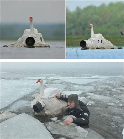 【画像】自然を撮影するカメラマンに興味津々の動物達!!の画像(19枚目)