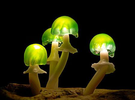 本物のような光るキノコのようなライトが可愛い!!の画像(10枚目)