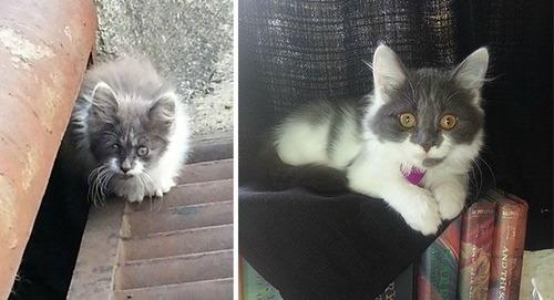 【画像】子汚い野良猫を拾って育てたら、こんなに可愛いニャンコになりましたよ!の画像(17枚目)