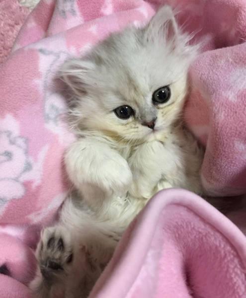 kittens_18