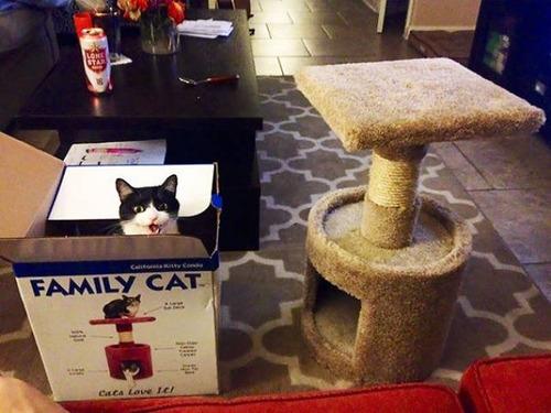 にゃんとも言えない、ちょっと困った猫の画像の数々!!の画像(9枚目)