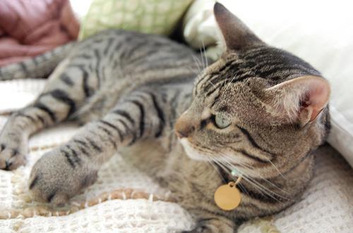 蜂に刺された猫が可愛いそうだけど可愛いwwwwの画像(15枚目)