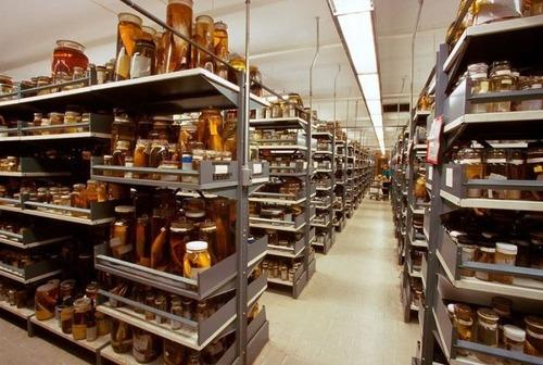 【画像】アメリカを代表するスミソニアン博物館の標本の保存倉庫が凄い!!の画像(8枚目)