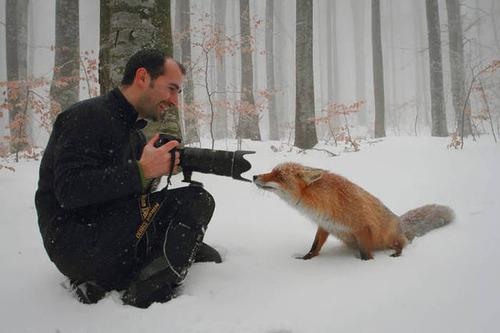 【画像】自然を撮影するカメラマンに興味津々の動物達!!の画像(20枚目)