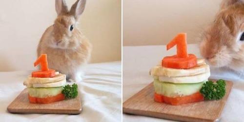 動物達の誕生日の写真の数々!!の画像(12枚目)