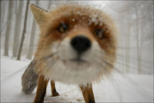 【画像】自然を撮影するカメラマンに興味津々の動物達!!の画像(24枚目)