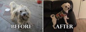 捨て犬の毛をキレイにカットしてるビフォーアフターの画像の数々!!の画像(8枚目)