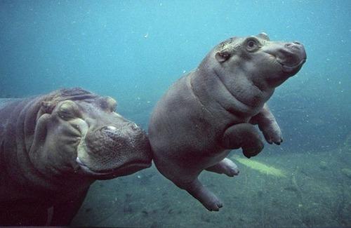 かわい過ぎる!癒される!動物の子供の画像の数々!!の画像(16枚目)