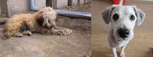 捨犬の時と良い飼主が見つかった時のワンちゃんのほのぼの比較画像の数々!!の画像(14枚目)