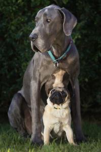 ずっと友達!仲がいい犬たちの画像が癒される!!の画像(17枚目)