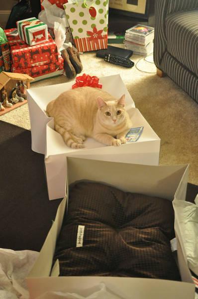 にゃんとも言えない、ちょっと困った猫の画像の数々!!の画像(13枚目)