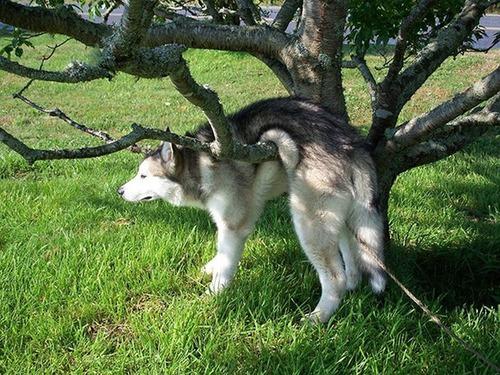 犬はバカ可愛い!!バカだけど憎めない可愛い犬の画像の数々!!の画像(13枚目)