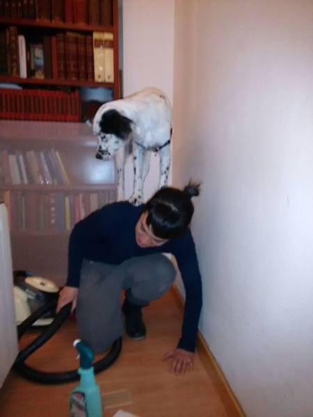 怯えてる犬の画像(19枚目)