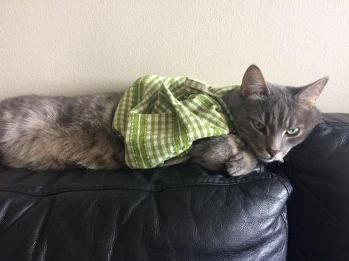 猫ちゃんのかわいいコスプレの画像(3枚目)