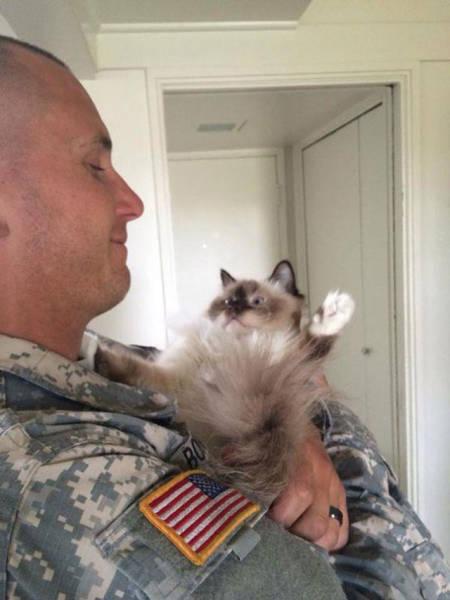 戦場にもネコは居る!!極限状態でも癒される戦場のネコの画像の数々!!の画像(4枚目)