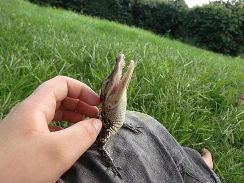 ほのぼのするけどちょっと怖い!幸せそうな動物たちの写真の数々!の画像(3枚目)