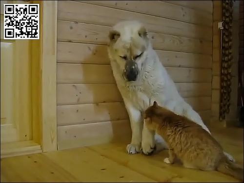 たぶん仲がよい犬と猫ww_000045137
