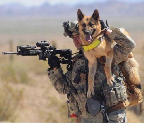 戦地での軍用犬の日常がわかるちょっと癒される画像の数々!!の画像(44枚目)