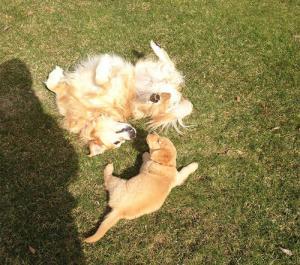 ずっと友達!仲がいい犬たちの画像が癒される!!の画像(9枚目)