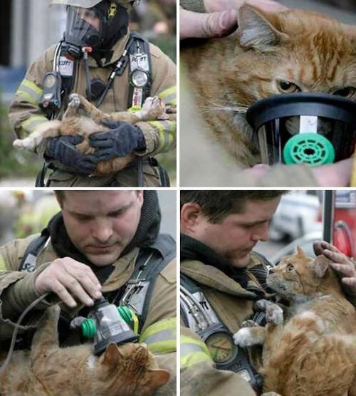 【画像】動物達も本気で助ける!ちょっと癒されるレスキュー隊の仕事の様子!!の画像(22枚目)