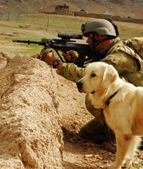 戦地での軍用犬の日常がわかるちょっと癒される画像の数々!!の画像(2枚目)