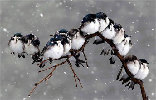 超過密!密集状態の鳥の画像がもふもふで癒されるwwの画像(4枚目)