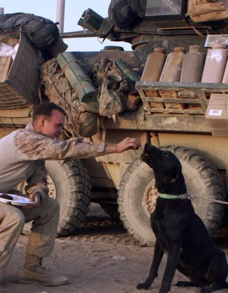 戦地での軍用犬の日常がわかるちょっと癒される画像の数々!!の画像(19枚目)